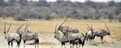 potovanje namibija