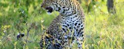 Safari Tanzanija